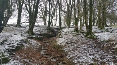Woodland with snow-covered floor in Exmoor