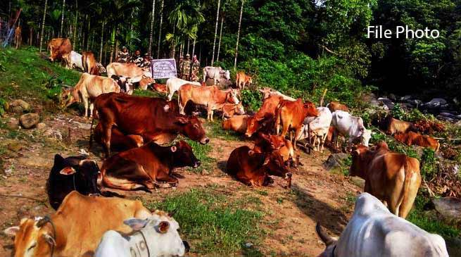Meghalaya: BSF Seizes Huge Cattle at Indo-Bangladesh Border