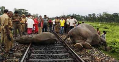Assam: speeding train kills 5 wild elephants