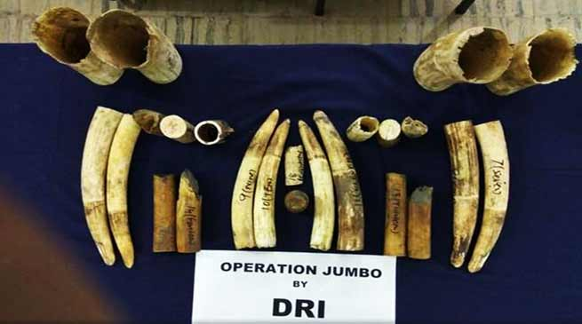 Assam: DRI seized 24 pieces of ivory from a railway employee