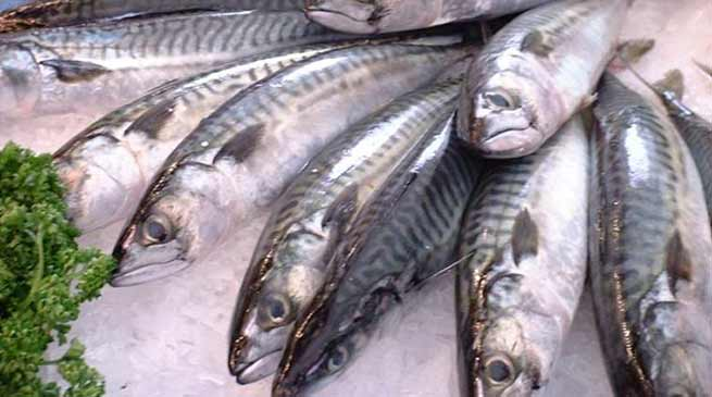 Assam govt bans fish import from other state on formalin
