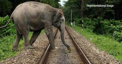Assam: Elephant lost life in train accident near lumding