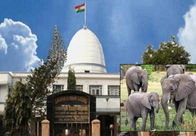 Elephant Transfer case: Gauhati HC disposed of PIL