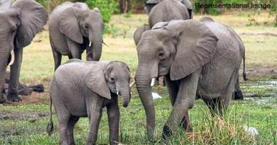 Assam: NGO files PIL against transfer of 4 Elephants from Assam to Gujrat on lease