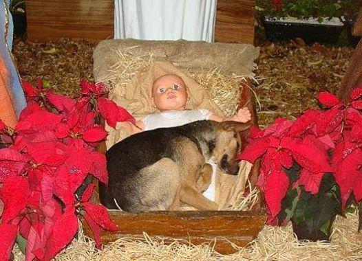 Abandon dog seeks assistance from baby Jesus.