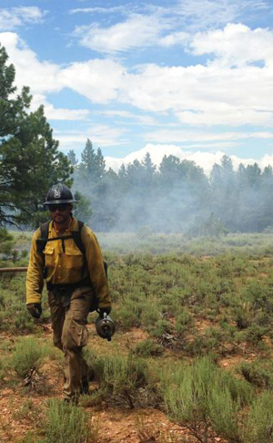 Kaibab Forest Service Photo