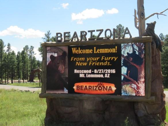 800-bear-lemmon