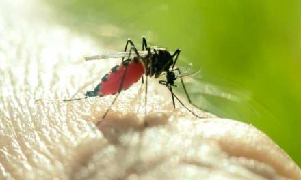 Mosquito disease risk