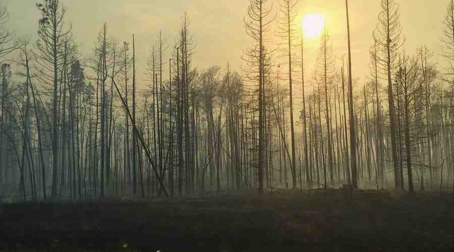 A Year After the Wood Buffalo Wildfire