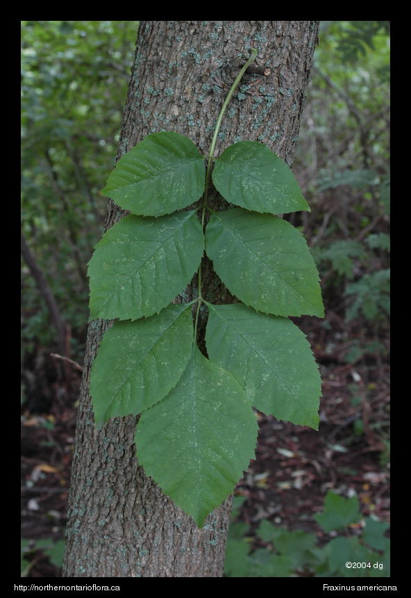 Native Ontario Plants