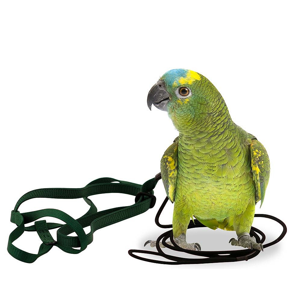 The Aviator Parrot Harness