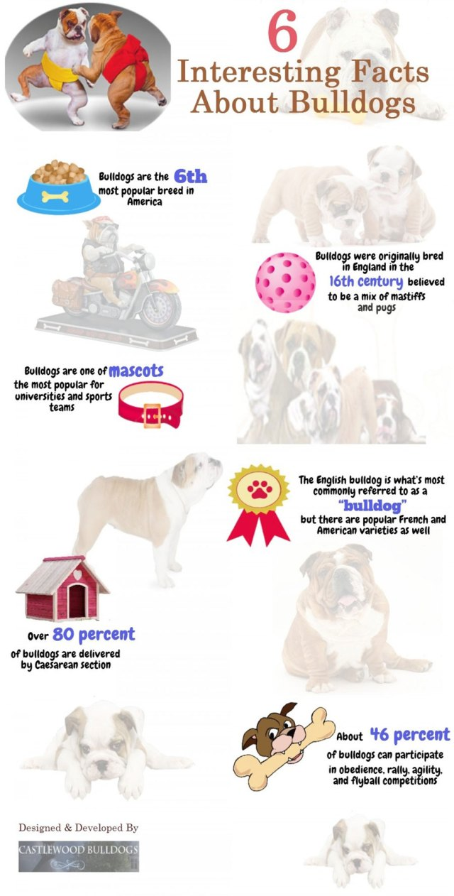 6-interesting-facts-about-bulldogs