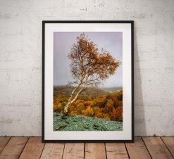 Lake District Landscape Photography, Autumn tree, Hodge close, Cumbria, England. Landscape Photo. Mounted print. Wall Art.