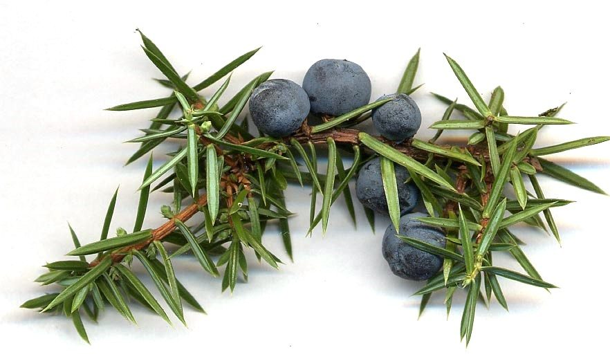 Juniper Berries. Commonly dried before adding. To be classed as 'Gin,' the flavoured base spirit must contain it in some form.