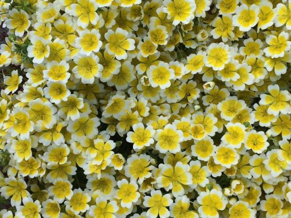 mooie geel witte bloemen