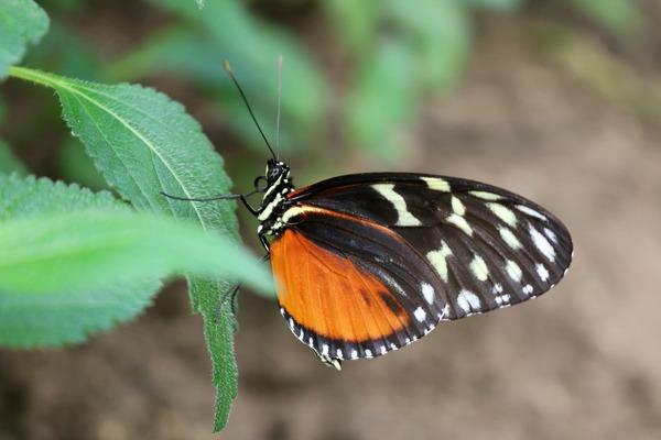 orchideeen_hoeve_luttelgeest_oranje_vlinder