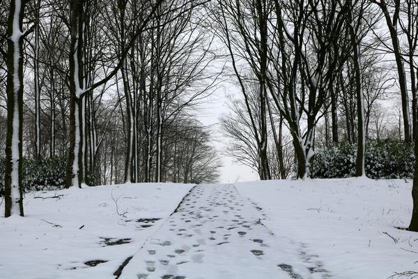 sneeuw_in_drachten_januari_2016