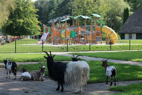 nienoord-leek-kinderboerderij-geiten