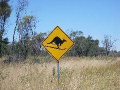 Skiing Kangaroos