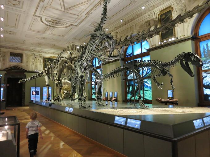Dino bones Vienna museum