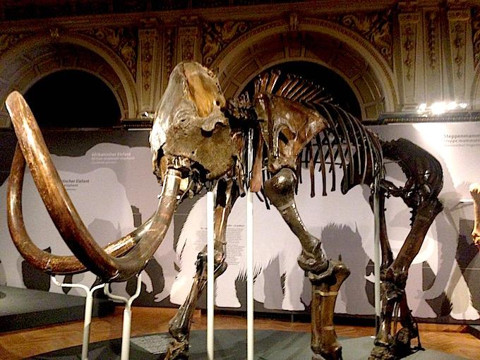 Vienna mammoth