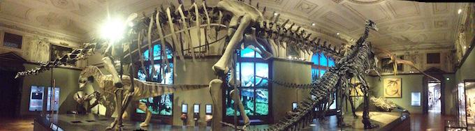 dinosaur bones Vienna