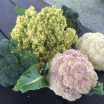 Photo of different coloured brassicas grown in the garden.