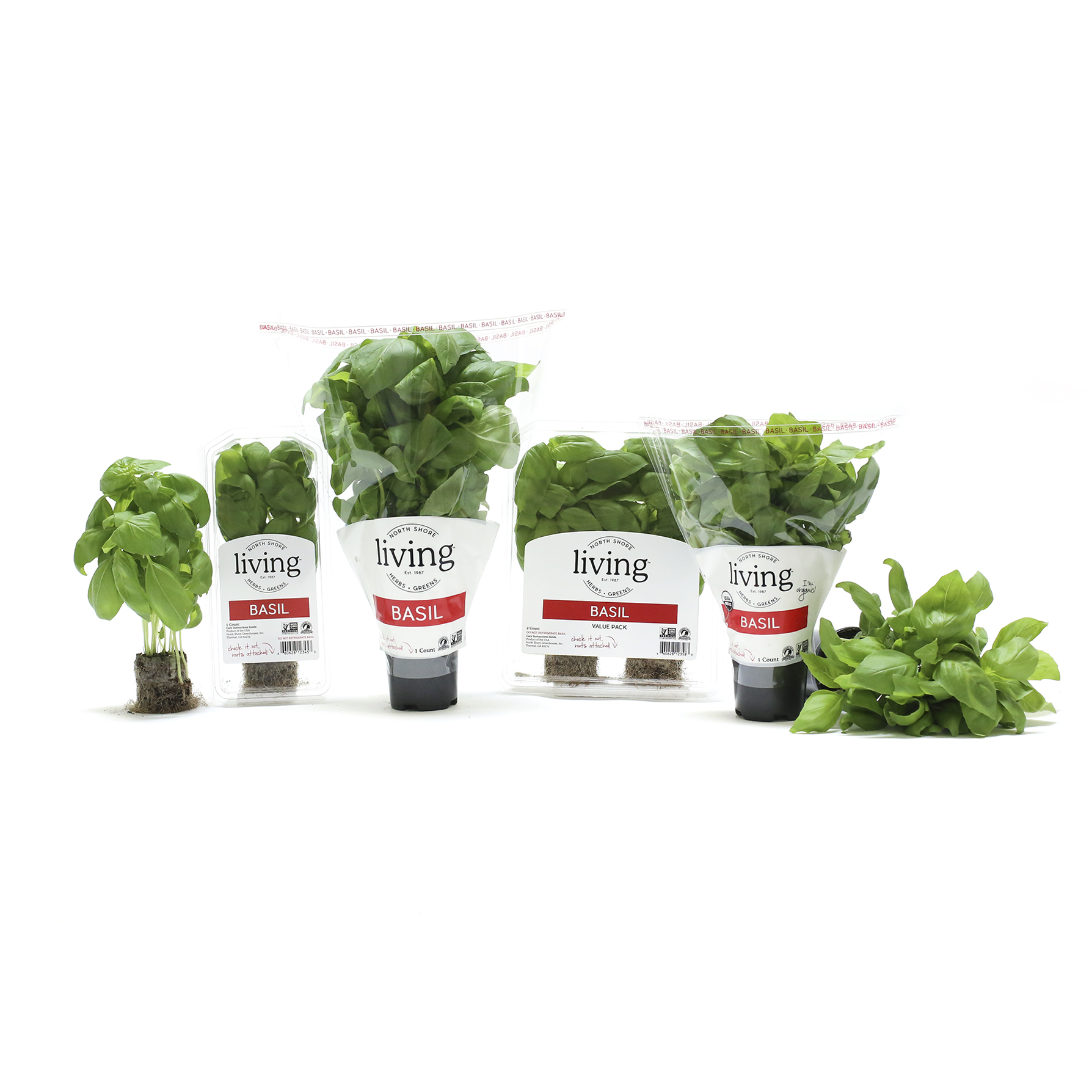 basil fresh herb plant cooking tips north shore living herbs