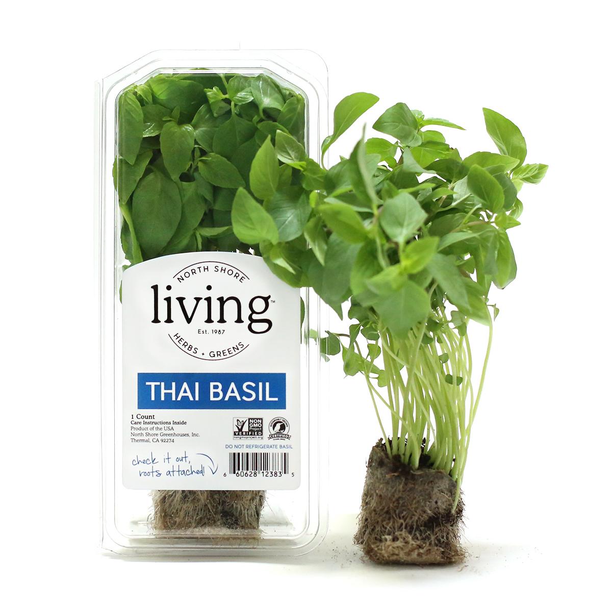 thai basil fresh herb cooking tips north shore living herbs