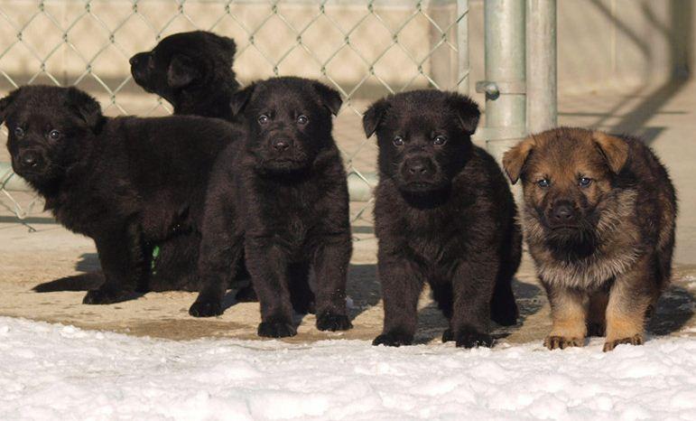 https://i2.wp.com/www.northshoredailypost.com/wp-content/uploads/2020/02/puppies.jpg?fit=771%2C466&ssl=1