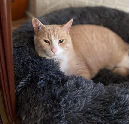 https://i2.wp.com/www.northshoredailypost.com/wp-content/uploads/2021/06/lost-cat.jpg?fit=430%2C411&ssl=1