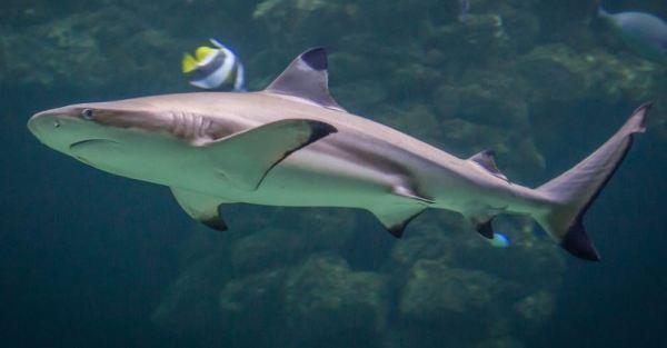 https://i2.wp.com/www.northshoredailypost.com/wp-content/uploads/2021/09/shark-fins.jpg?fit=600%2C313&ssl=1