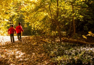 Walks in the Woods at Cushman Preserve