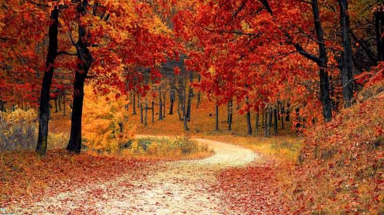 Massive Mid-October UPDATE!