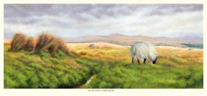 Bush Down - Dartmoor