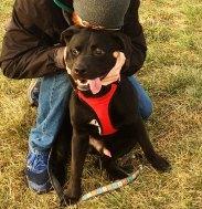 PJ at the dog park