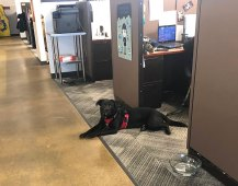 PJ loves to hang out at the office.