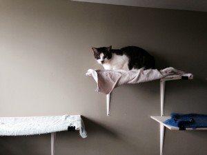 cat on shelf frosty