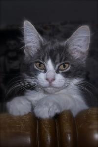 KitKat, one of Mugsy's hefty siblings