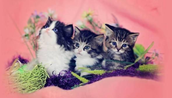 auction kitten photo