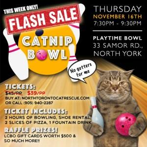 catnip_bowl_flashsale