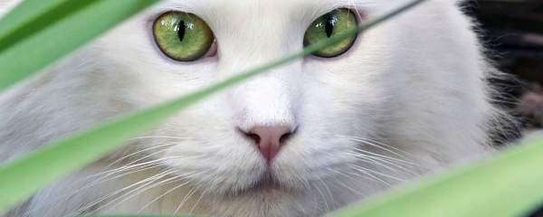 Cat Safe Cat Gardens
