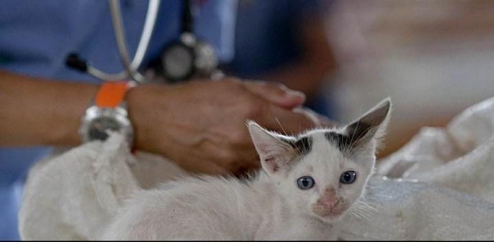 vet_cat_1524265699.jpg