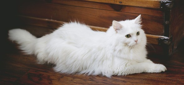 white_cat_1537636667.jpg