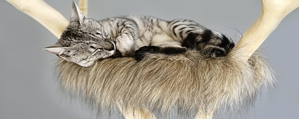 Cats and Their ZZZZZ's