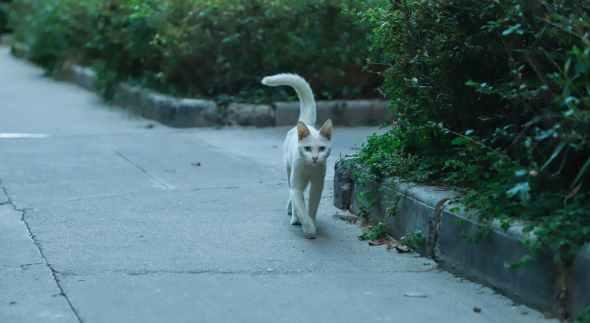 short coated cat walking near bushes