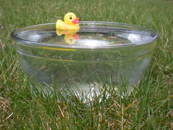 Rubber_duck_in_glass_bowl