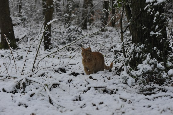 Cat, Winter