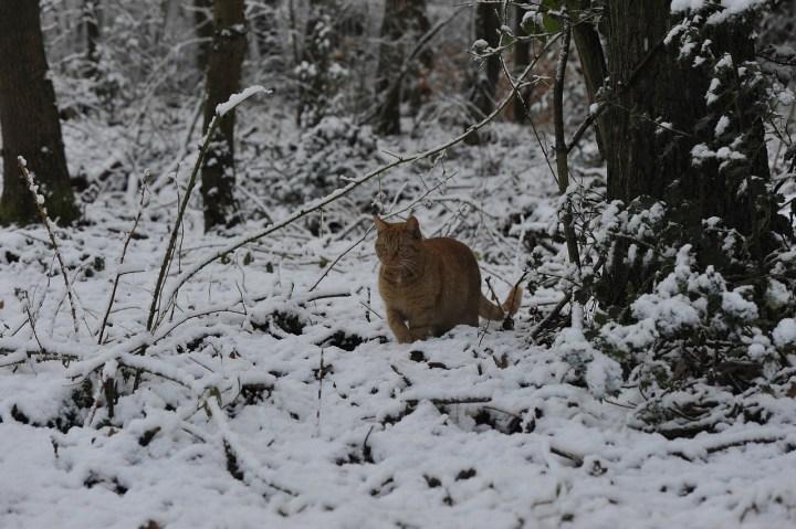 Cat, Winter