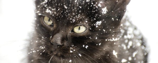 The Hazards of Cat Hypothermia